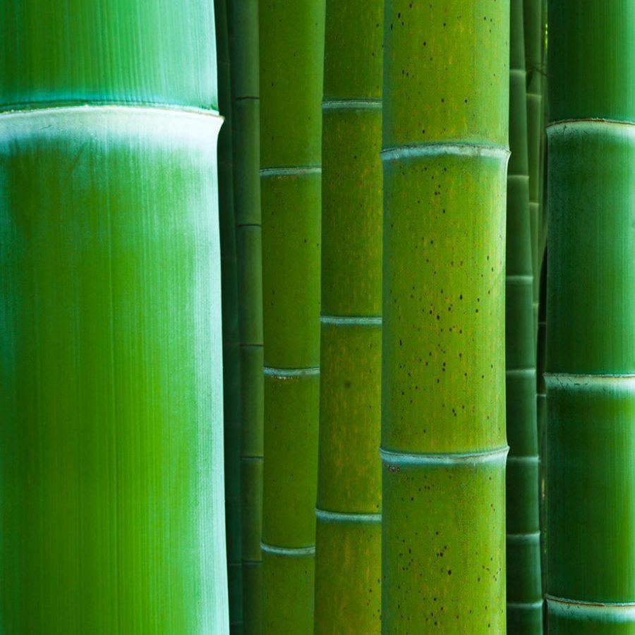Photo de plusieurs tiges de bambous vertes en gros plan