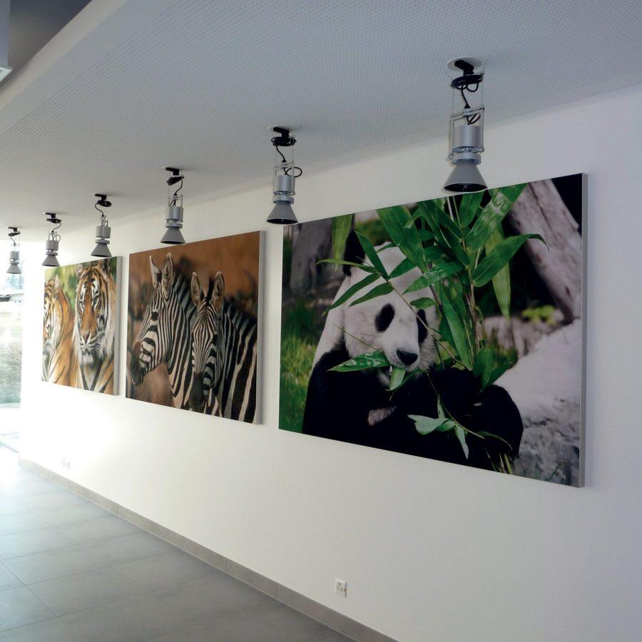 Photo cadres acoustiques muraux imprimées animaux Chopard