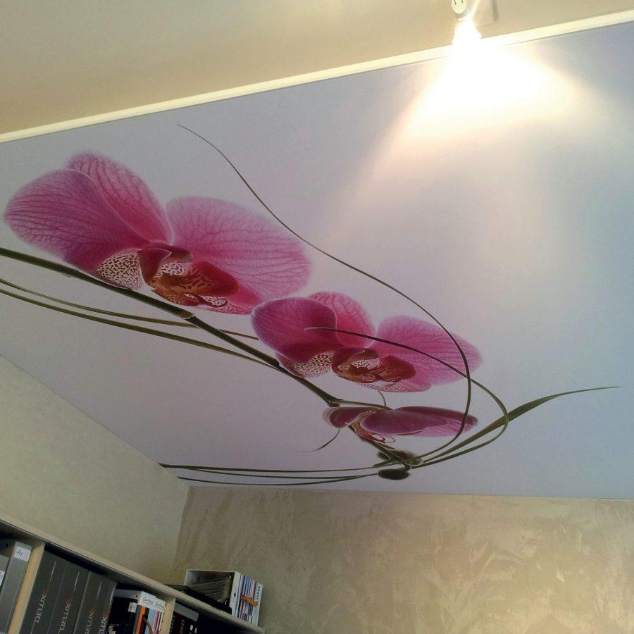 photo d'un cadre décoration avec le visuel d'une orchidée, fixé au plafond